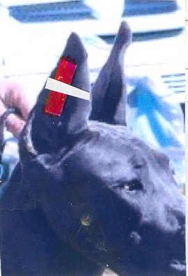 Tape Dogs Ears
