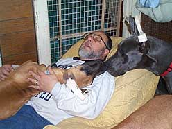 Great Dane Breeders Greatdaneladycom